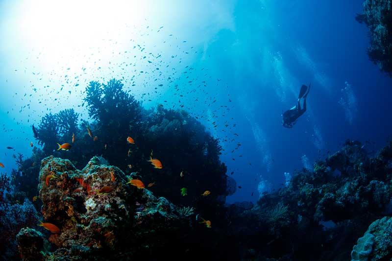 Jean Michel Cousteau dive tours in Fiji
